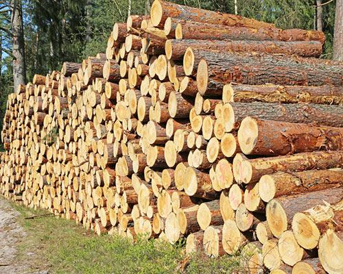 Exploitation forestière difficile